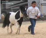 Humans get a work-out when they show horses In-Hand